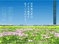 田島ケ原サクラソウ自生地国指定100年チラシ画像